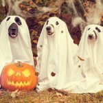Halloween Hazards - Are you prepared
